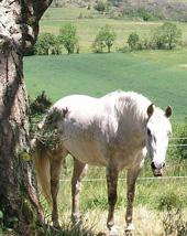 Puy de Dome equitation